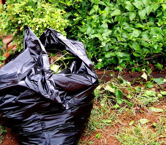 Black Trash Bag Next to Plants